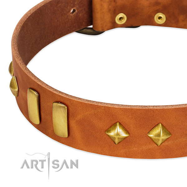 Fancy walking full grain natural leather dog collar with designer adornments