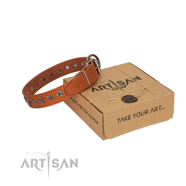 Walking dog collar of durable leather with embellishments