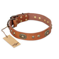 """Stunning Dress"" FDT Artisan Tan Leather dog Collar with Old Bronze Look Plates and Studs"
