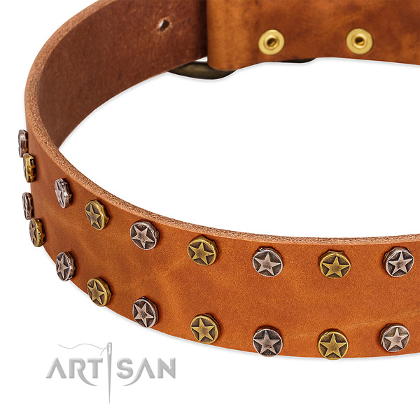 Daily walking full grain leather dog collar with significant adornments