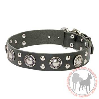 Leather Collar for Dog Walking in Style