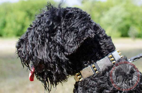 Black Russian Terrier collar decorated with plates and spikes