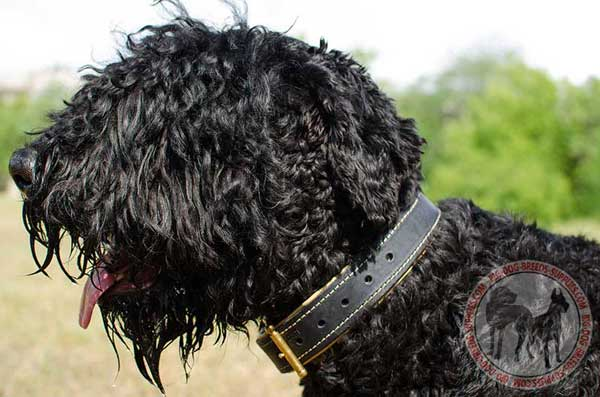 Black Russian Terrier Collar Leather Carefully Stitched