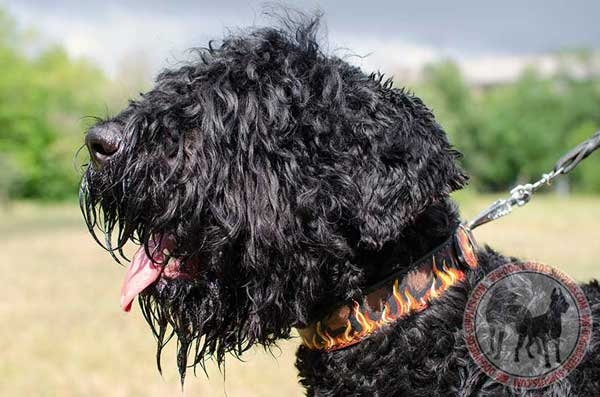 Two Ply Leather Collar for Black Russian Terrier