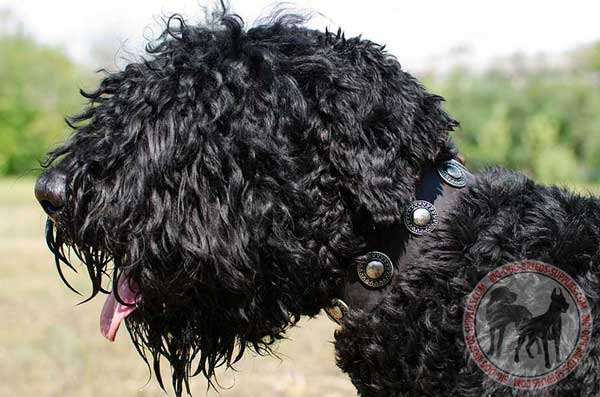 Leather Black Russian Terrier Collar