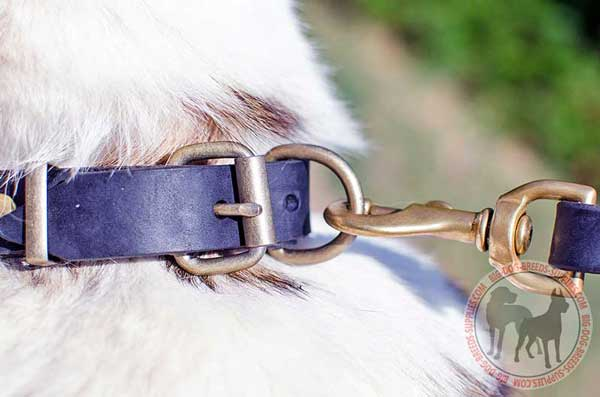 Brass Buckle and D-ring on Quality Leather Dog Collar