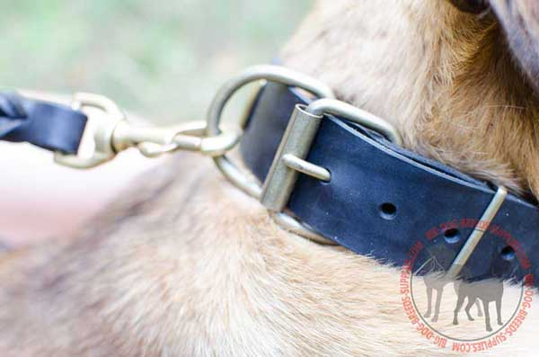 Brass Hardware on Stylish Leather Dog Collar