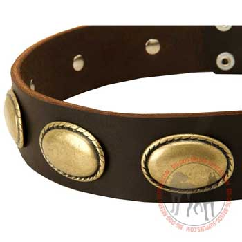 Gorgeous Oval Plates Attached to Leather Collar