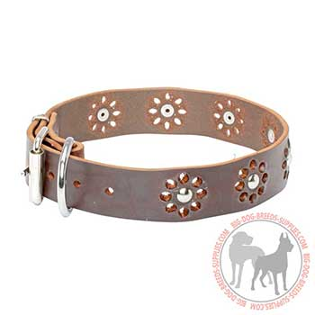 Leather Collar for Canine Walking