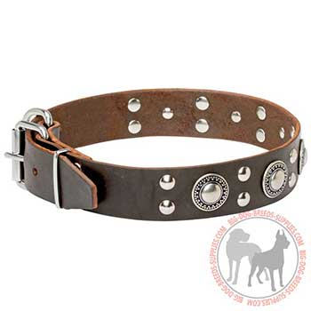 Leather Collar with Nickel-plated Studs