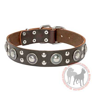 Brown Dog Collar with Studs