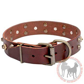 Leather Dog Collar for Walking
