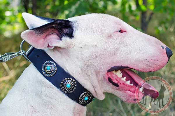 Leather Bull Terrier Collar with Blue Stones