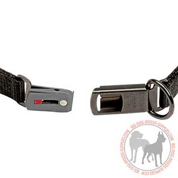 Firm Pinch Dog Collar with Secure Buckle