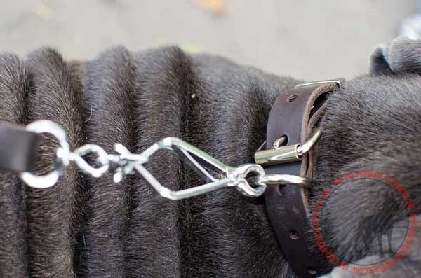 D-ring on Leather Dog Collar for Leash Attachment