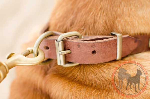 D-Ring on Leather Collar Should be Used for Leash Attachment