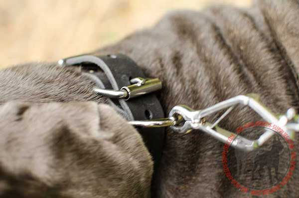 D-Ring on Leather Dog Collar for Lead