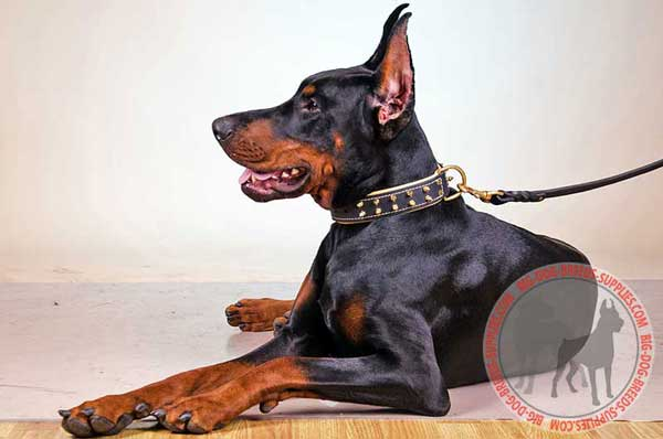 Leather Collar for Doberman