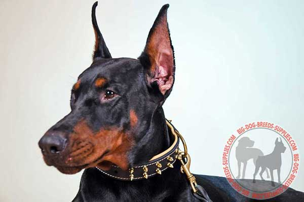 Spiked Leather Doberman Collar
