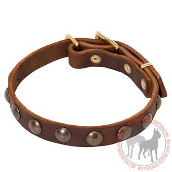 Dog Leather Collar with Rust Resistant Brass Studs