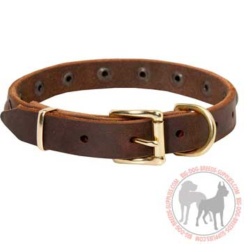 Dog Leather Collar with Rust Resistant Brass Rivets
