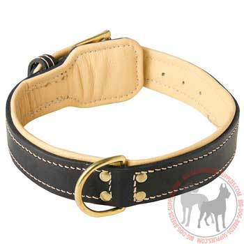 Dog Leather Collar with Comfy Nappa Padding