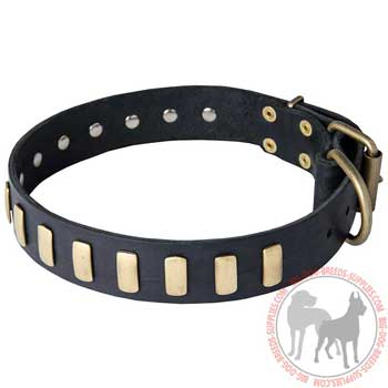 Dog Leather Collar with Riveted Brass Plates