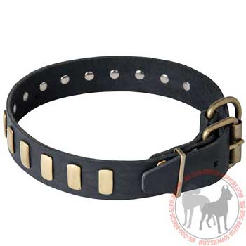 Dog Collar Leather with Rust Resistant Rivets