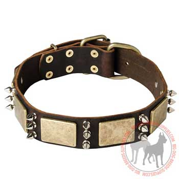 Skillfully decorated dog collar with vintage plates