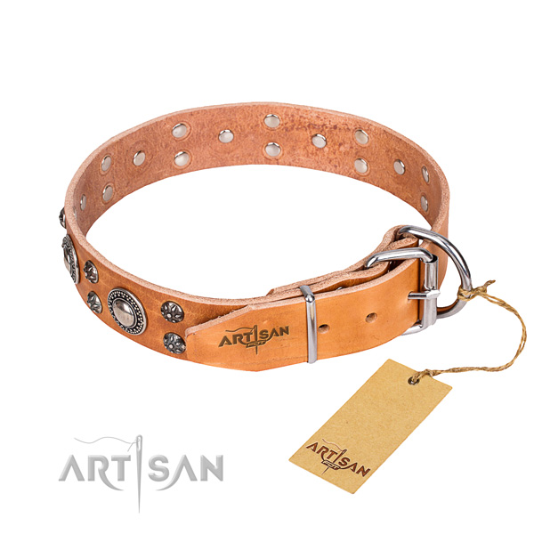 Everyday walking full grain leather collar with studs for your four-legged friend
