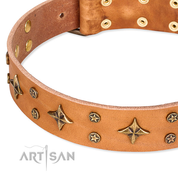 Full grain genuine leather dog collar with exceptional decorations