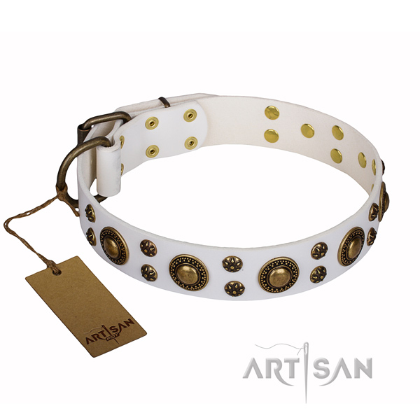 Daily walking full grain natural leather collar with embellishments for your canine