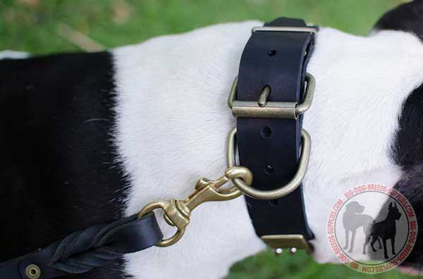 Collar for dogs with D-ring and buckle