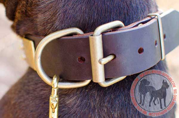 Dog collar with brass fittings