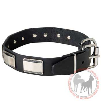 Dog collar with brass D-ring and buckle