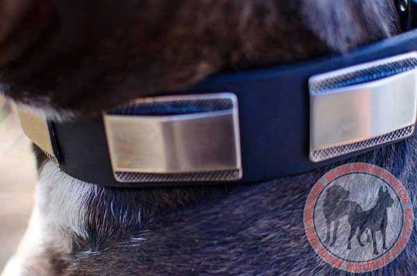 Dog collar with nickel plates