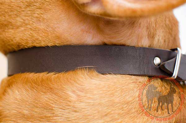 Leather Dog Collar Comfortable for Regular Walking