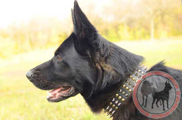 Designer Leather German Shepherd Collar with Decoration