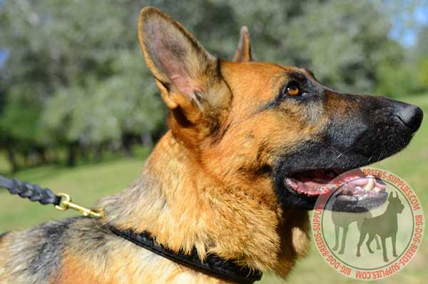 Leather German Shepherd Collar with Braid