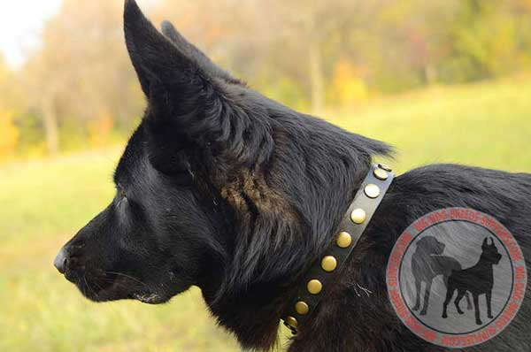 Leather Collar for German Shepherd with Circles