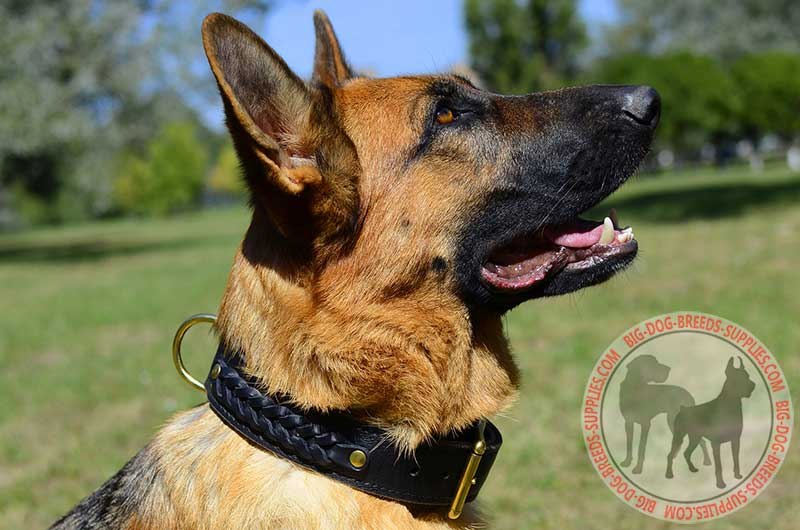 Dog Collars German Shepherd
