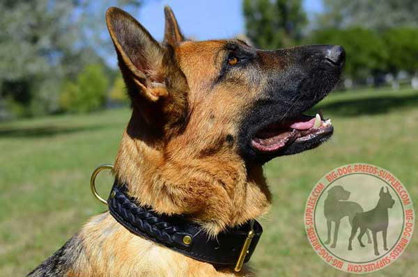 Leather Braided German Shepherd Collar for Walking and Training