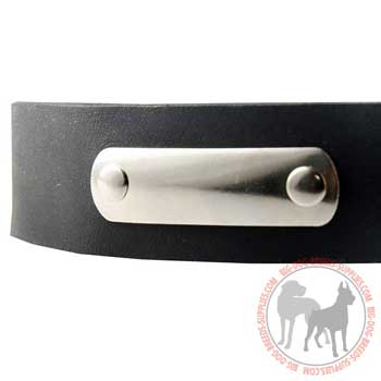Nickel Identification Tag Riveted to Smooth Leather Collar