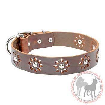 Leather Collar for Canine Stylish Walking