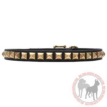 Decorated Leather Dog Collar for Walking in Style