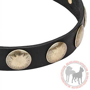 Leather Dog Collar with Golden Color Circles