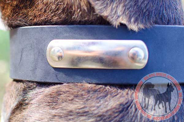 Training Leather Collar with Nickel Plated Name Tag