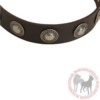 Leather Collar for Canine Training