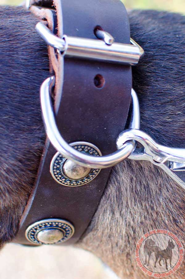 Leather Collar Nickel Buckle and Ring for Leash Attachment