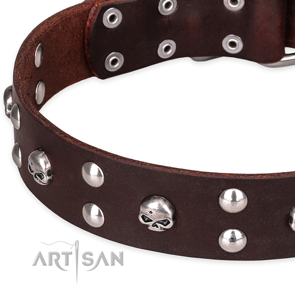 Casual style leather dog collar with astounding studs